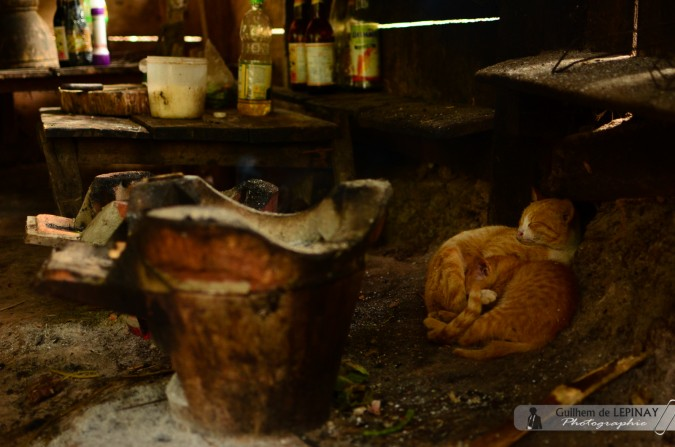 GibbonExpreience-Laos-photo-Guilhem-de-Lepinay-10