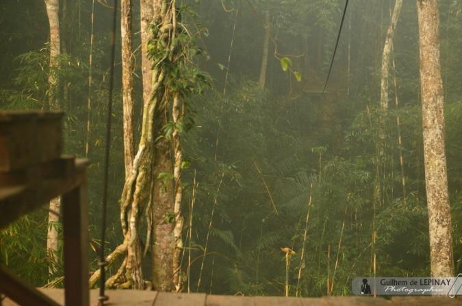 GibbonExpreience-Laos-photo-Guilhem-de-Lepinay-11