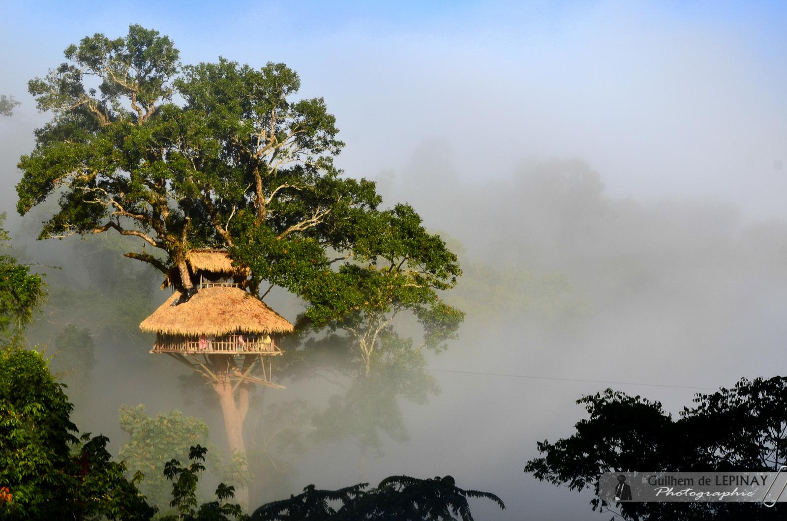 Maison dans les arbres - Trek jungle Laos- Gibbon Experience Bokeo
