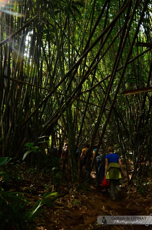 GibbonExpreience-Laos-photo-Guilhem-de-Lepinay-2