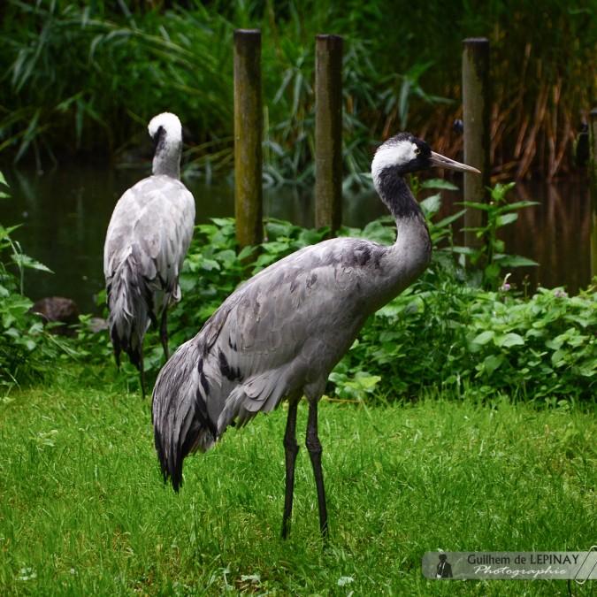- Zoologischer Garten in Wien - Österreich