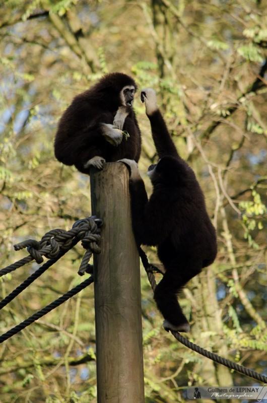 Zoo-Lille-photographe-Guilhem-de-Lepinay-11