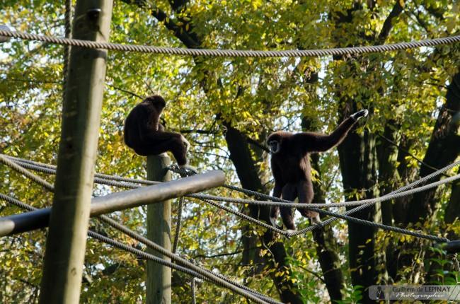 Zoo-Lille-photographe-Guilhem-de-Lepinay-9