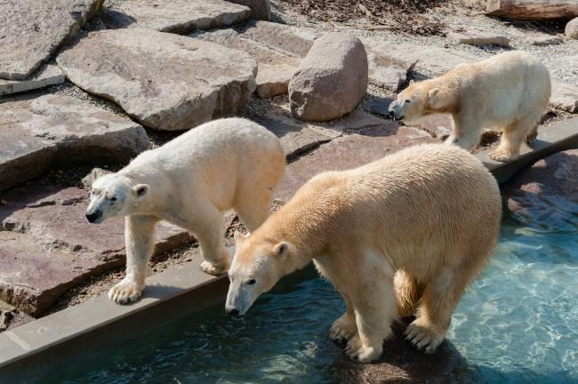 Espace-Grand-Nord-Zoo-Mulhouse-photographe-Guilhem-de-Lepinay-102