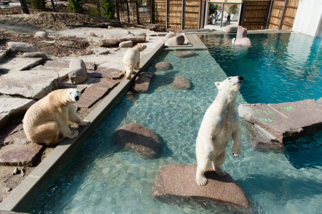 Espace-Grand-Nord-Zoo-Mulhouse-photographe-Guilhem-de-Lepinay-129