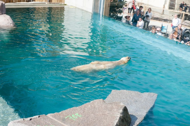 Espace-Grand-Nord-Zoo-Mulhouse-photographe-Guilhem-de-Lepinay-134