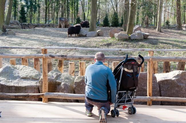 Espace-Grand-Nord-Zoo-Mulhouse-photographe-Guilhem-de-Lepinay-18