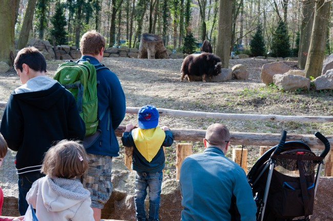 Espace-Grand-Nord-Zoo-Mulhouse-photographe-Guilhem-de-Lepinay-19