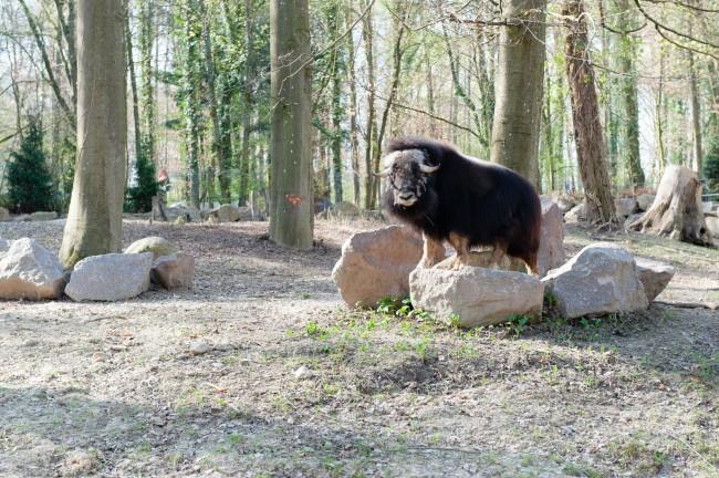 Espace-Grand-Nord-Zoo-Mulhouse-photographe-Guilhem-de-Lepinay-25