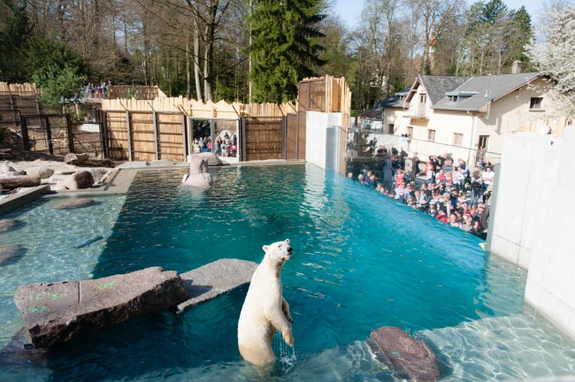 Launch of the North large area of the zoo of Mulhouse