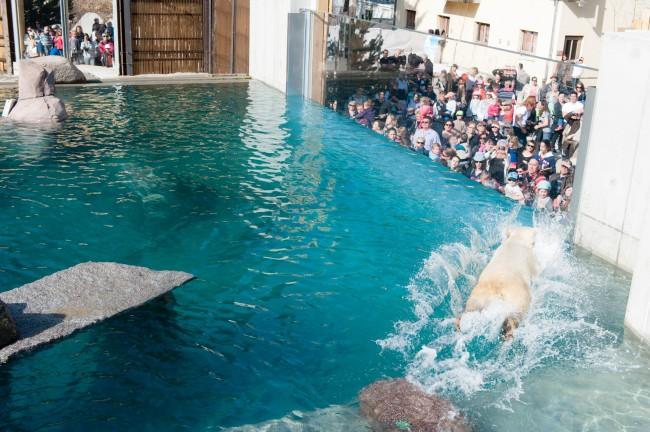 Start der großen Nord-Gegend im Zoo von Mulhouse