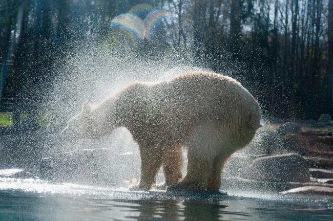 Bär polar Zoo von mulhouse