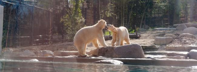 Eröffnung Raum weit nördlich Zoo Mulhouse