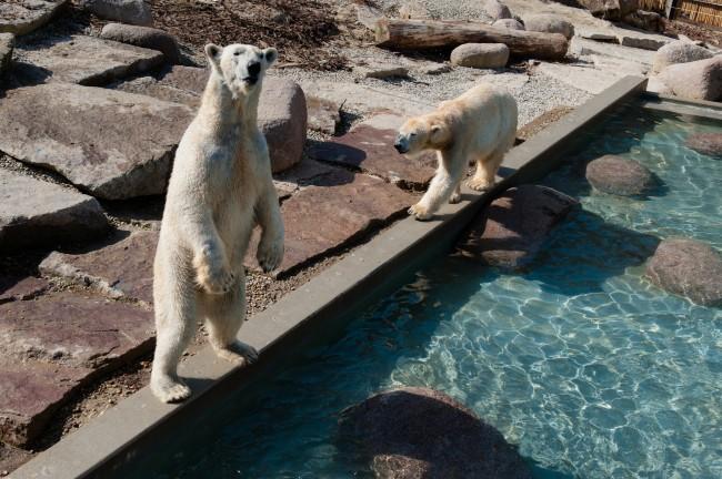 Espace-Grand-Nord-Zoo-Mulhouse-photographe-Guilhem-de-Lepinay-94